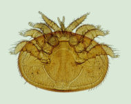varroa pest and disease management