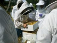 beginner beekeeping class workshop