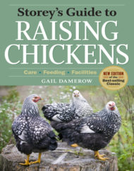 storeys guide to raising chickens