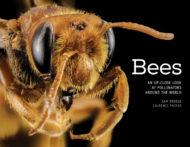 Bees an upclose look