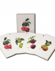 heirloom apple greeting card
